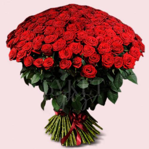 Букет из 151 розы Маричка